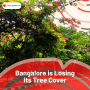 Bangalore is losing it's green cover. Again.